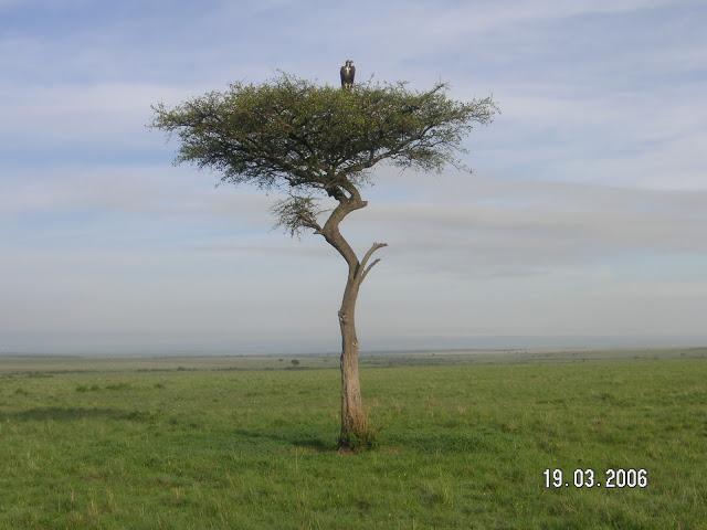 Mara park Bild 047 (2)