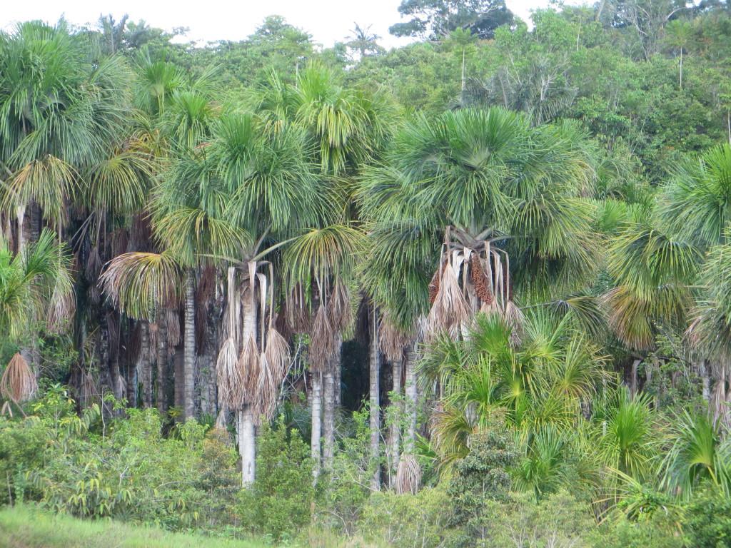 Bild 2 Tropiska palmer